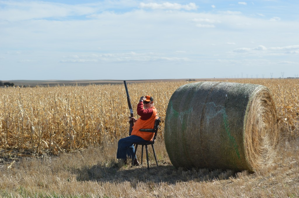 Premier South Dakota Pheasant Hunt