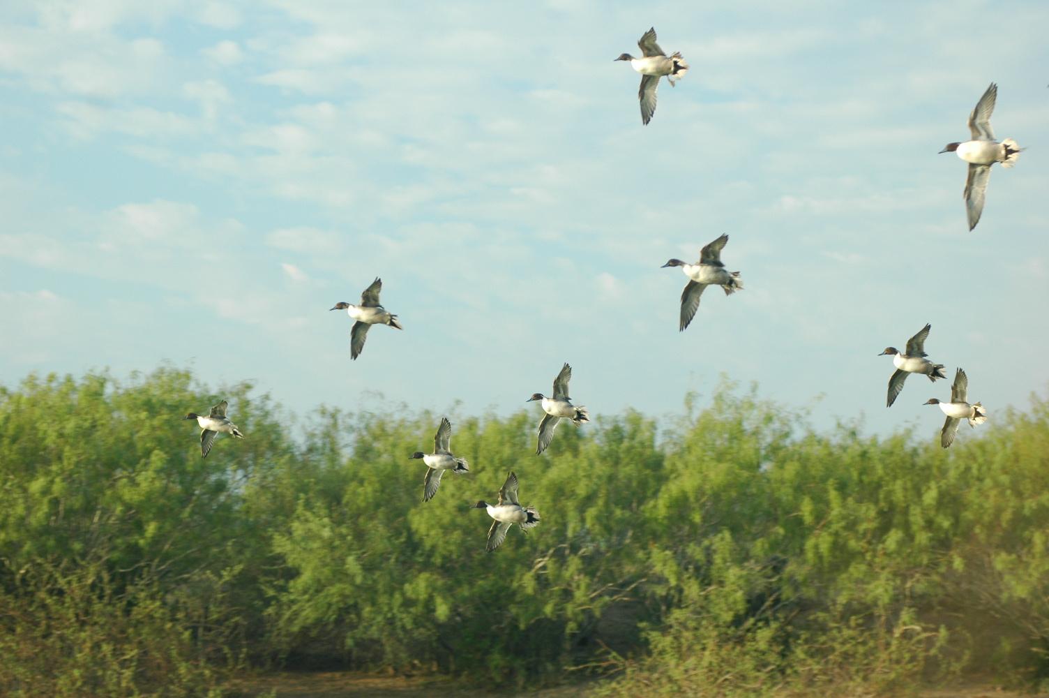 hunting, wing-shooting at La Finca Lodge in San Fernando Mexico with Trek Safaris