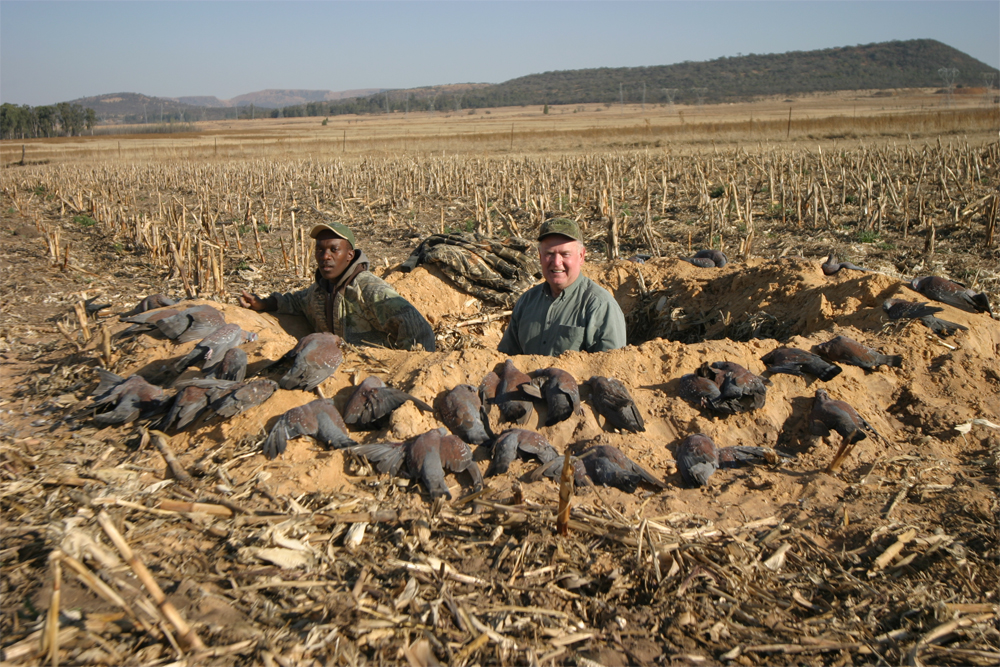 pigeon decoys wingshooting with Trek Safaris