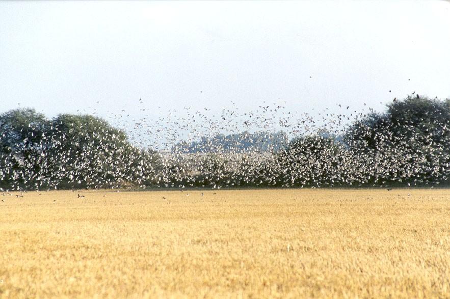 dove hunting in field in Uruguay with Trek Safaris