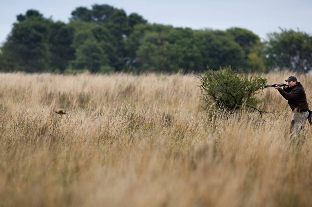 Argentina Dove, Duck Perdiz and Pigeon Hunting with Trek Safaris