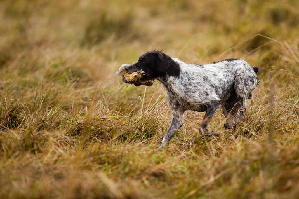 birddog in Argentina with Trek Safaris