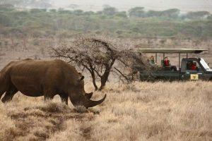 lewa_safari_camp_-_activities__wildlife_-_game_drive__white_rhino-61