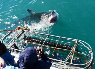 Shark Diving South Africa with Trek Safaris