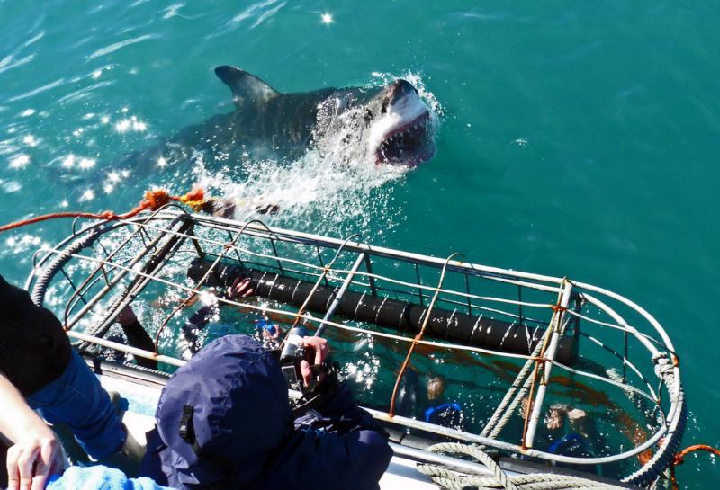 Shark Diving South Africa with Trek Safaris